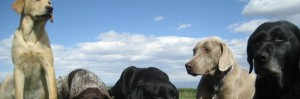 4 dogs, Cottonwood