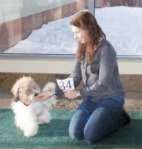 """Lynn Tradig with BEAR, the purebred winner for a slot in """"Rover."""""""