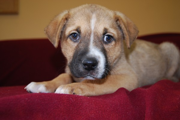 Bonnie Bell, one of the many wonderful animals available for adoption at Second Chance.